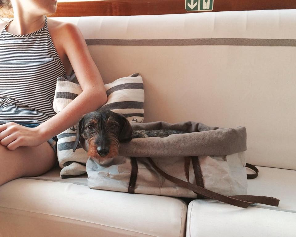 Travelling with Fido - A complete guide to everything you need to travel with your furry friend